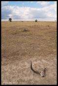 Ol Pejeta Conservancy, Kenya - Antelope Skull