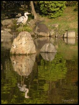 Kyoto Heron