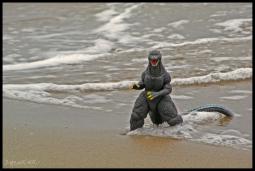 Godzilla Siting
