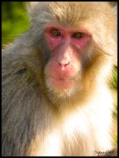 Kyoto Monkey
