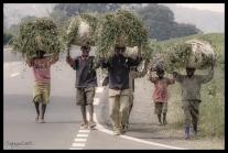 Grass for Cows - Nyungwe Forest Rwanda