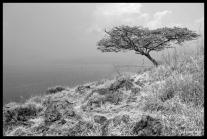 Napoleon Island - Lake Kivu, Rwanda