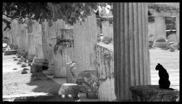 Pedastal Cat, Ephesus