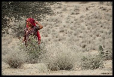 Osiyan - In the Bush