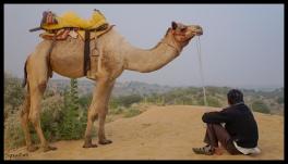 Osiyan - Man and Camel