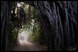 Ranthambore - Tunnel