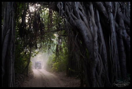 Ranthambore - Tunnel