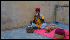 Jaipur - Snake Charmer
