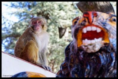 Monkey Temple - Shimla