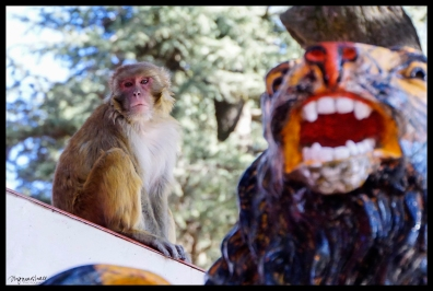 Monkey Temple - Shimla