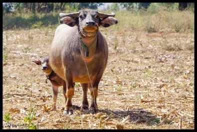 A Mother's Protection - Shan State