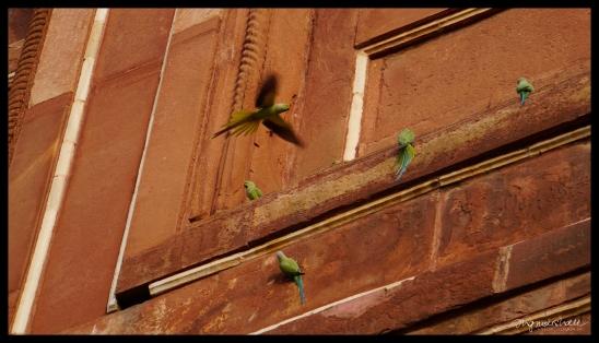 Birds at the Taj