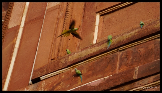 Birds at the Taj