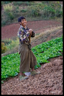 Cabbage Farmer - Shan State