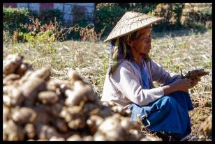 Palaung Ginger Farmer - Peine Pin Village, Myanmar