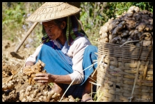 Palaung Ginger Farmer - Peine Pin Village, Myanmar