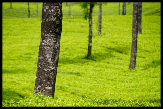 Tea with Trees - Munnar