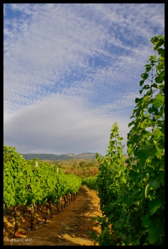 Vineyard Sky - Inle Lake