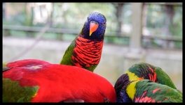 Eating Birds - Kuala Lumpur