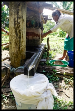 Sugar Cane Press - Madidi National Park