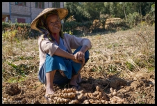 Ginger Farmer