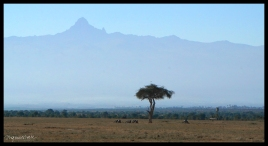 Rhino Graves in front of Mt. Kenya