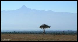 Rhino Graves in front of Mt. Kenya