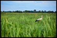 Wetlands - Giethoorn