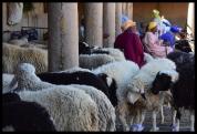Animal Market - Rissani