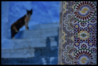 Cat Patterns - Chedchaouen