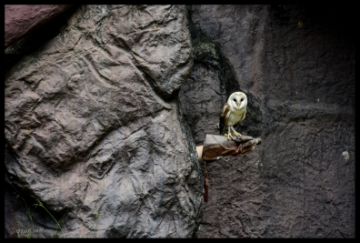 Owl in Rock